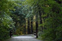 Ein Weg im Holz stockfoto