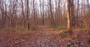 Ein Weg im laubwechselnden Herbstwald stock video