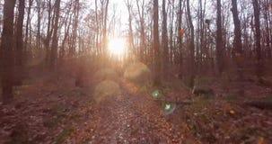 Ein Weg im laubwechselnden Herbstwald stock footage