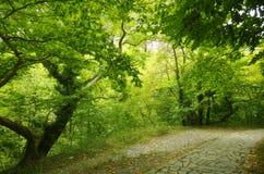 Ein Weg im Park Stockfotografie