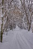 Ein Weg im schneebedeckten Wald Stockbilder