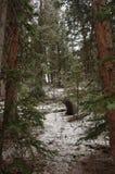 Ein Weg im Wald Stockbilder