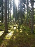 Ein Weg im Wald Stockfotos
