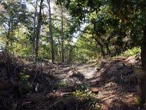 Ein Weg im Wald Lizenzfreies Stockfoto