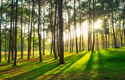 ein Weg ist im grünen Wald Lizenzfreies Stockfoto