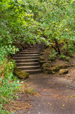 Ein Weg mit Treppe im Wald Lizenzfreies Stockfoto