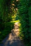 Ein Weg umgeben durch Vegetation im Park bei Sonnenuntergang Lizenzfreies Stockfoto