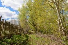 Ein Weg unter den Frühlingsbäumen Lizenzfreies Stockbild