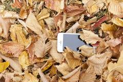 Ein weißer Handy liegt unter dem Herbstlaub Lizenzfreies Stockfoto