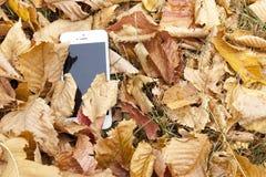 Ein weißer Handy liegt unter dem Herbstlaub Stockfotografie