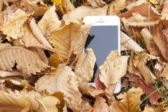 Ein weißer Handy liegt unter dem Herbstlaub Stockfotos