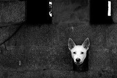 Ein weißer Hund Stockbilder