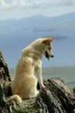 Ein weißer roter Hund blickt in Richtung des schweren Wolkenmeers unter Berg lizenzfreie stockfotografie