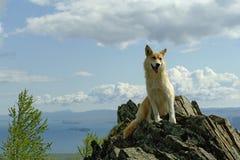 Ein weißer roter Hund blickt in Richtung des schweren Wolkenmeers unter Berg Lizenzfreies Stockbild