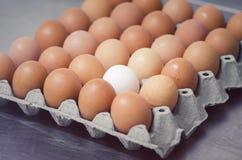 Ein weißes Ei im Kasten horizontal Lizenzfreies Stockfoto