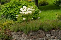Ein weißes peonia in einem romantischen Garten im Sommer lizenzfreies stockbild