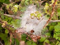 Ein weißes silk Netz des Spinnennetzes voll des Eises und der Blasen des Wassers achtern Stockfotografie