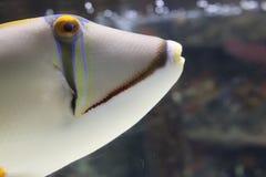 Ein Weißfisch mit gelben ayes lizenzfreie stockfotos