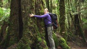 Ein weiblicher Wanderer umarmt einen großen RegenBaum des Waldes in der tarkine Wildnis auf der Westküste von Tasmanien stock footage
