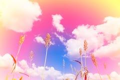 Ein weicher Wolkenhintergrund Lizenzfreie Stockfotos