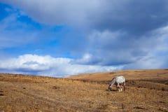 Ein weiden lassendes Pferd der schöne Glenbow-Ranch-provinzielle Park in Alberta lizenzfreies stockfoto