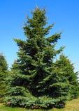 Ein Weihnachtsbaum im Park lizenzfreie stockfotos