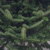 Ein Weihnachtshintergrund der Tanne ein Baum Stockfotografie