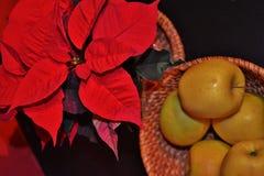 Ein Weihnachtsstern Lizenzfreie Stockbilder