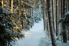 Ein Weise throuh das Holz Stockfotografie