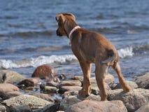 Ein Welpe durch den Strand Lizenzfreie Stockfotografie