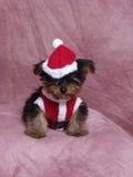 Ein Welpe gekleidet in Santa Suit Lizenzfreies Stockfoto