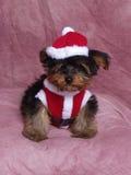 Ein Welpe gekleidet in Santa Suit Stockbilder
