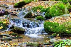 Ein wenig Fluss in das Holz Stockfotografie