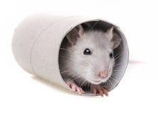 Ein wenig Mäusespielen lizenzfreie stockfotografie
