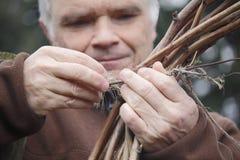 Landwirt, der Himbeerniederlassung bindet Lizenzfreie Stockfotos