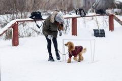 ein Wettbewerb für Hunde, der Spaß beginnt im Winter, redaktionell Stockbilder