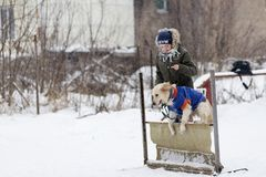 ein Wettbewerb für Hunde, der Spaß beginnt im Winter, redaktionell Lizenzfreies Stockfoto