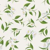 Ein wiederholendes Muster von Blumen und von grünen Teeblättern Lizenzfreies Stockfoto
