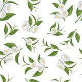 Ein wiederholendes Muster von Blumen und von grünen Teeblättern Lizenzfreies Stockbild