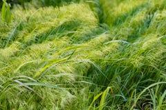 Ein Wiesen-Hintergrund Stockbild
