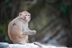 Ein wilder Affe Lizenzfreies Stockfoto