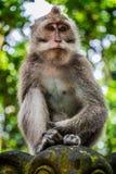 Ein wilder Affe gehockt auf einer Statue stockfotografie