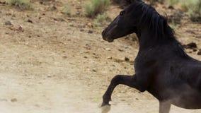 Ein wilder Buchtmustang der wildes Pferdeherde Onaquai In der Wüste von Nevada stoisch stehen, Vereinigte Staaten lizenzfreies stockfoto