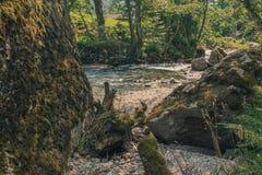 Ein wilder Fluss und Bäume Lizenzfreies Stockfoto