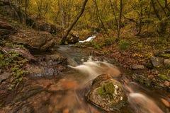 Ein wilder Wald Stockbilder