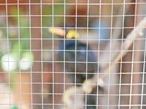 Ein wildes Vogel Beo eingeschlossen in einem Käfig, der Hoffnungslosigkeit und verlierende Freiheit im Leben symbolisiert lizenzfreie stockbilder