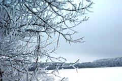 Ein Winter hat die stilvollen und zurückgehaltenen Kombinationen von Farben Stockbild
