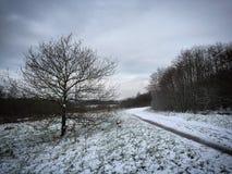 Ein Winterweg Stockfotografie
