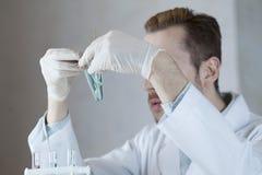 Ein Wissenschaftler vergleicht zwei Anlagen in den Reagenzgläsern Stockfoto
