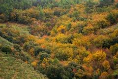 Ein wunderbarer Wald mit warmen Herbstfarben stockfotos